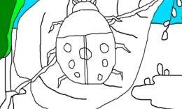 简笔画(七星瓢虫)的画法