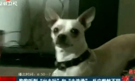 笑死啦!别人家的狗怎么都这么萌