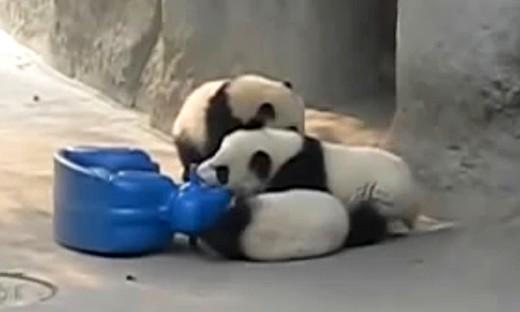 信息量好大!超萌大熊猫玩摇摇木马
