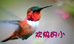欢快的小鸟